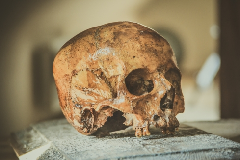 Canva - Old Human Skull