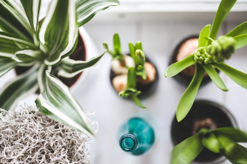 Canva - Top view of houseplants on white background